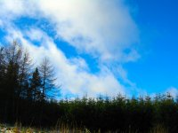 niebo nad lasem